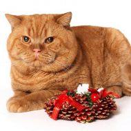 Самые редкие и интересные окрасы Британских кошек: фото и описание каждой из расцветок