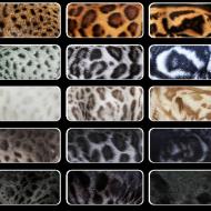 Обзор редких и распространенных окрасов кошек и особенности ухода за шерстью
